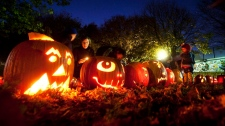 Glowing jack-o'-lanterns line the ground people light pumpkins during the 3rd Annual Christie Pits Pumpkin Parade at Christie Pits Park in Toronto. (Darren Calabrese / THE CANADIAN PRESS)