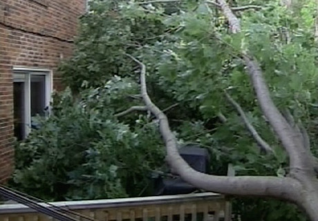 Several trees came crashing down after the GTA was hit with heavy rain and gusting winds on Sunday, Sept. 14, 2008.