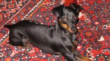 Yuri the therapy dog