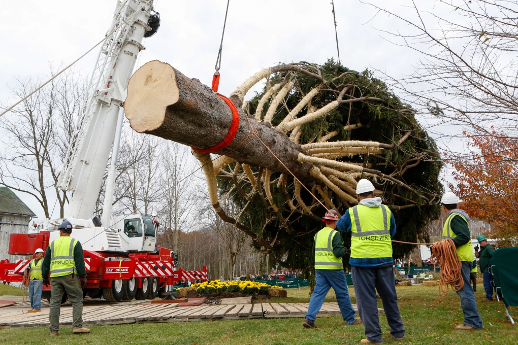 Rockefeller Christmas tree cut down in PA