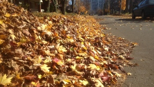 Leaves sit curbside in a Kitchener, Ont., neighbourhood on Sunday, Nov. 2, 2014. (Phil Molto / CTV Kitchener)