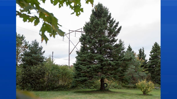 John and Ethel Ann MacPherson of Purlbrook, Antigonish County have offered to donate their 55-year-old, 13-metre white spruce to Boston. (Facebook)