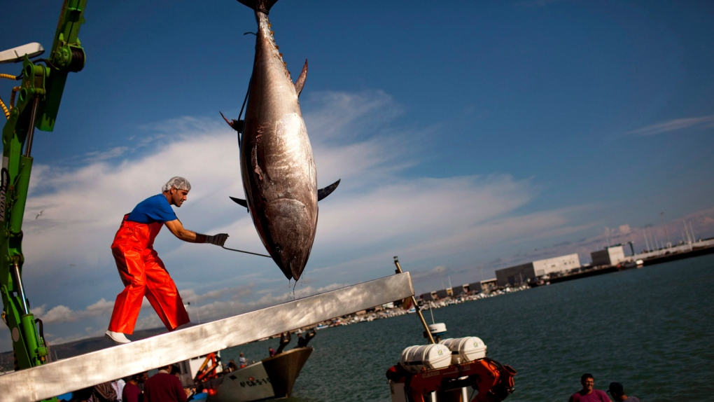 Bluefin tuna quotas