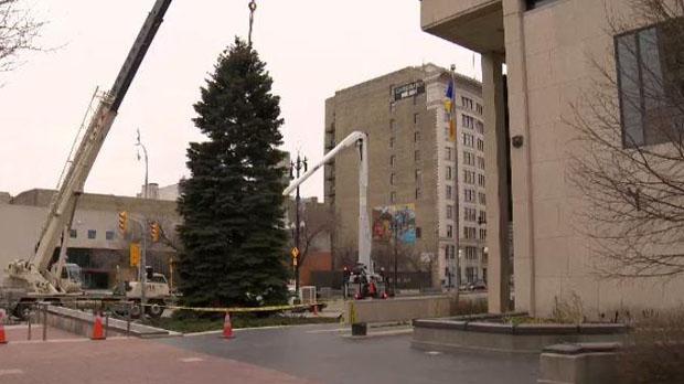Winnipeg's Christmas Tree Delivered To City Hall