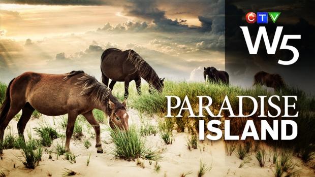W5: Paradise Island