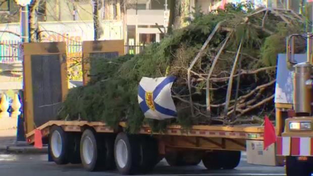 Nova Scotia tree for Boston