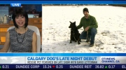 CTV News Channel: Calgary dog makes TV debut
