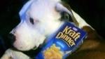 Box of Kraft Dinner goes viral for Christmas aucti