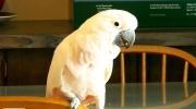 CTV Saskatoon: Local parrot goes viral
