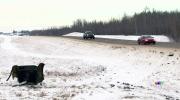 CTV Edmonton: Four dead in crash near Leduc