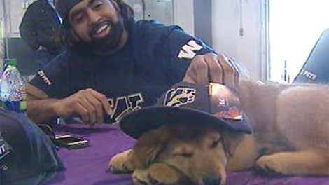 Winnipeg Blue Bomber Obby Khan pets a pup in need of a home during an adoption fair Sunday.