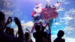 Extended: Santa swims with stingrays in Toronto
