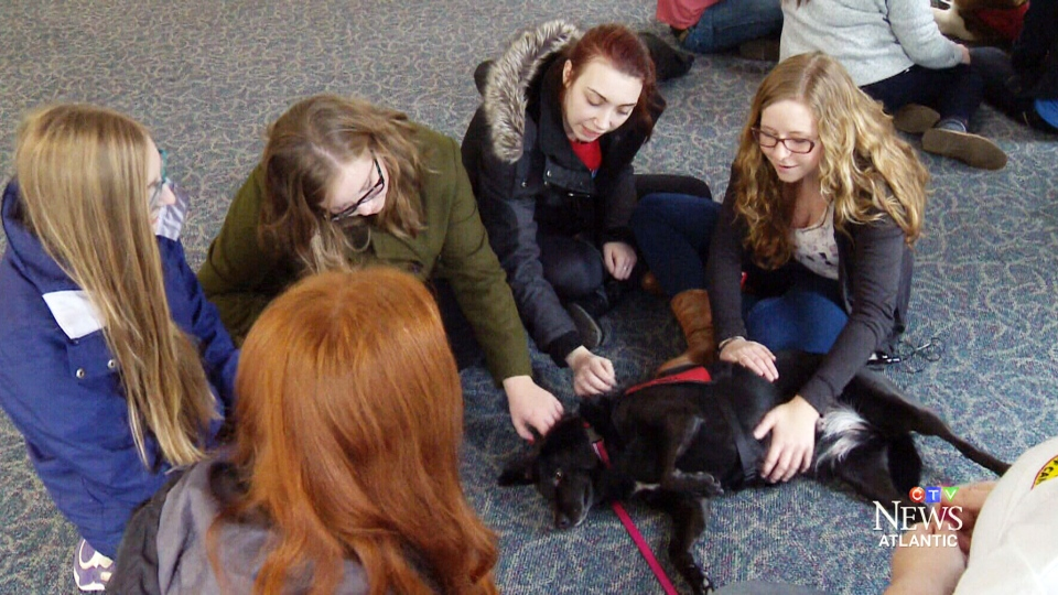 Therapeutic Paws of Canada, a national non-profit organization, sends dogs and cats to universities, schools, seniors' homes and hospitals to help people unwind.