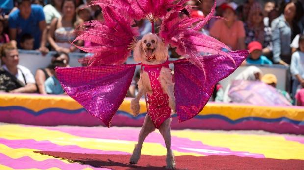 mexico circus animal ban