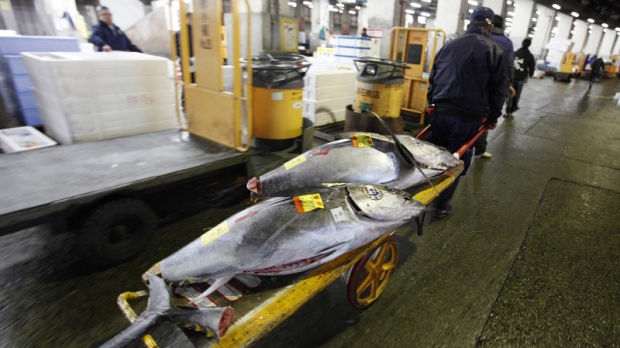 A successful buyer takes their tuna from the auction at the Tsukiji Market in Tokyo, Japan, Friday, Jan. 6, 2012. Tsukiji Market is one of the world's largest fish markets, handling over 2,000 tons of marine products per day. (AP Photo/Mark Baker)
