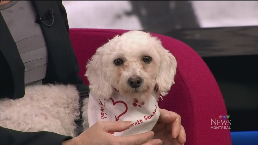 CTV Montreal: Keeping pets safe for the holidays | CTV News