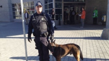 From the Montreal police K9 unit, Shrek helped find a smoke bomb thrown in the metro tunnels. (Jean-Luc Boulch/CTV News)