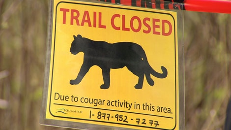 A cougar alert warns hikers to stay off trails in the Valleycliffe area of Squamish. April 19, 2012. (CTV)