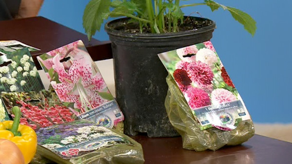 Mark Cullen talks to Canada AM about planting summer bulbs, Thursday, April 19, 2012.