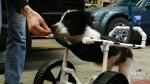 CTV Regina: Challenges won't slow puppy down