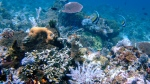 Coral reefs are seen in the waters of Tatawa Besar, Komodo islands, Indonesia, Thursday, April 30, 2009. (AP / Dita Alangkara)