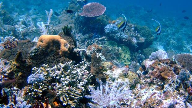 Coral reefs are seen in the waters of Tatawa Besar, Komodo islands, Indonesia, Thursday, April 30, 2009. (AP / Dita Alangkara)