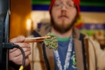 Sales associate Matt Hart uses a pair of chopsticks to hold a bud of Lemon Skunk, the strain of highest potency available at the 3D Dispensary on Dec. 19, 2014, in Denver. (David Zalubowski / AP Photo)