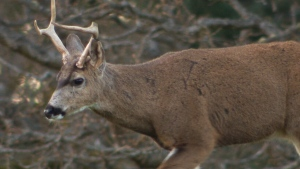 Deer cull could be on the horizon