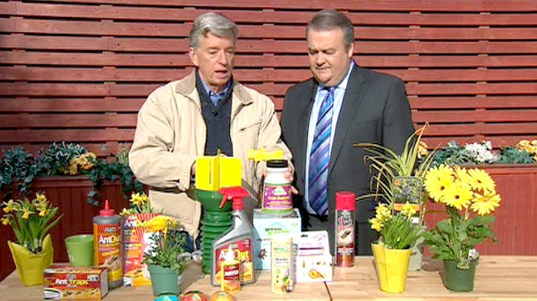 Mark Cullen tells Canada AM how to get rid of spring garden bugs, Wednesday, April 25, 2012.