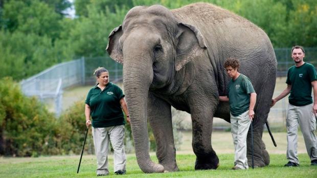 Edmonton, Bowmanville zoos among worst
