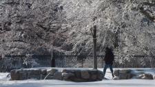 A man walks through a park in Ottawa