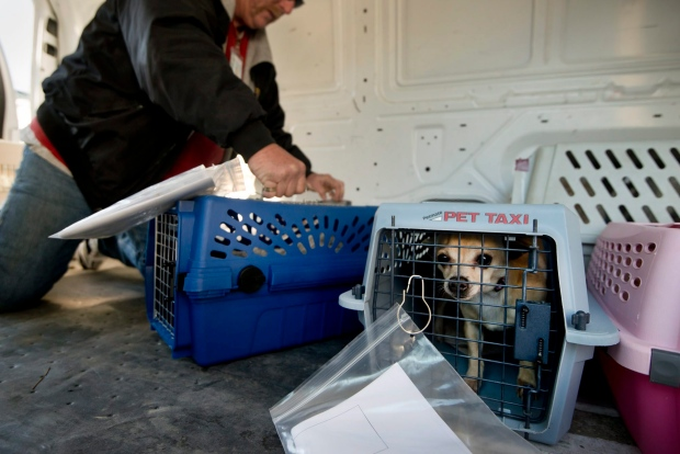 Appeal court nixes rule requiring air canada to create for Air canada pet in cabin