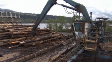 Flavelle Sawmill in Port Moody sits idle after being forced to close because of rising insurance rates. May 4, 2012. (CTV)