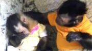 No monkeying around: Primate consoles sad friend