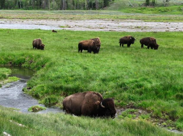 Yellowstone establece récords de asistencia de septiembre y del año hasta la fecha