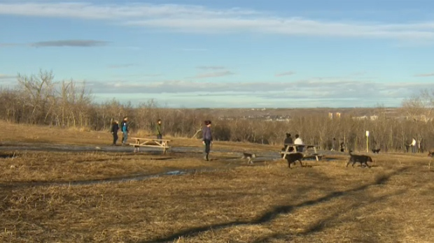 Edworthy Park dog park