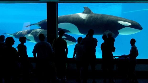Ontario bans breeding killer whales