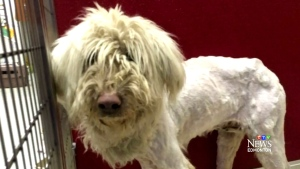 The Alberta SPCA has seized 200 dogs from a home in Milk River in the last month.