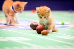 "This photo provided by Crown Media Family Networks shows kittens playing football in a scene from the Hallmark Channel's ""Kitten Bowl II,"" airing on Sunday, Feb. 1, 2015. (AP / Crown Media Family Networks, Menachem Adelman)"