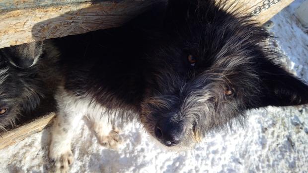 April Irving - seized dog