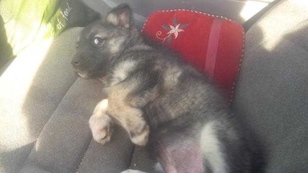 Milk River dog seizure
