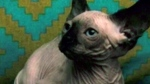 Mishandled cargo? Cat found frozen, dead after pla