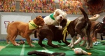 Canines duke it out for gridiron glory during Animal Planet's 11th annual Puppy Bowl, which aired on Sunday Feb. 1, 2014. (Animal Planet)
