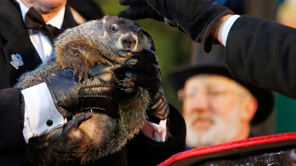 Groundhog Club handler Ron Ploucha holds Punxsutawney Phil, the weather prognosticating groundhog, as co-handler John Griffiths rubs his head, during the 129th celebration of Groundhog Day on Gobbler's Knob in Punxsutawney, Pa., Monday, Feb. 2, 2015. (AP / Gene J. Puskar)