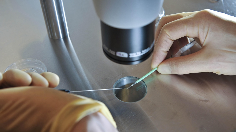 A scientist works during an IVF process on Aug. 11, 2008. (AP / Ben Birchall)