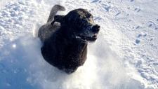 Saint John, N.B. residents dig out of snow