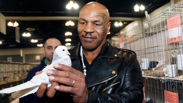Mike Tyson pigeon