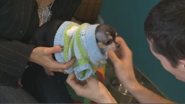 Montreal SPCA seized over 100 animals