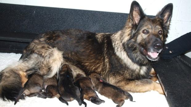 Rcmp Dog Training Innisfail
