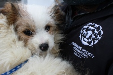 Quebec dog rescue